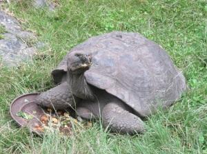 14 Dubious Tortoise