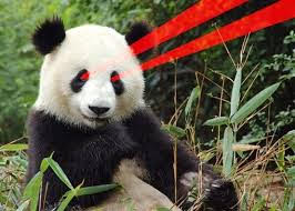 laser bear 1