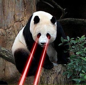 laser bear 2